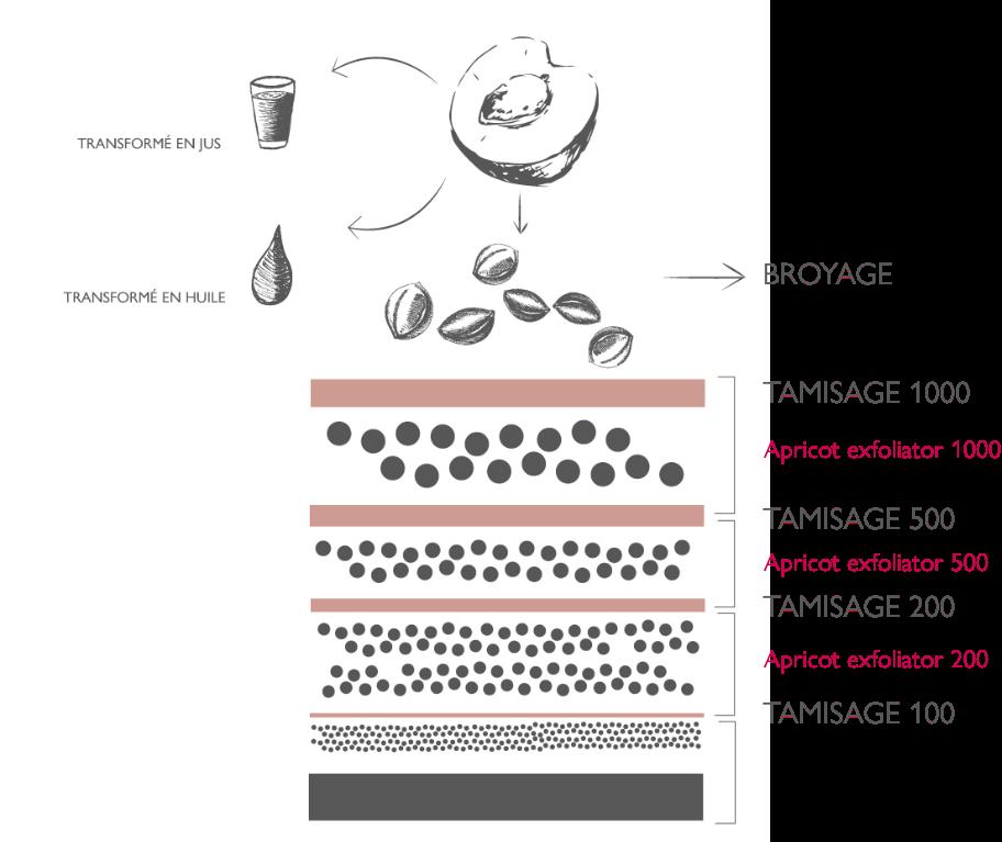 Lessonia ingredients - Processus de fabrication poudre cosmétique