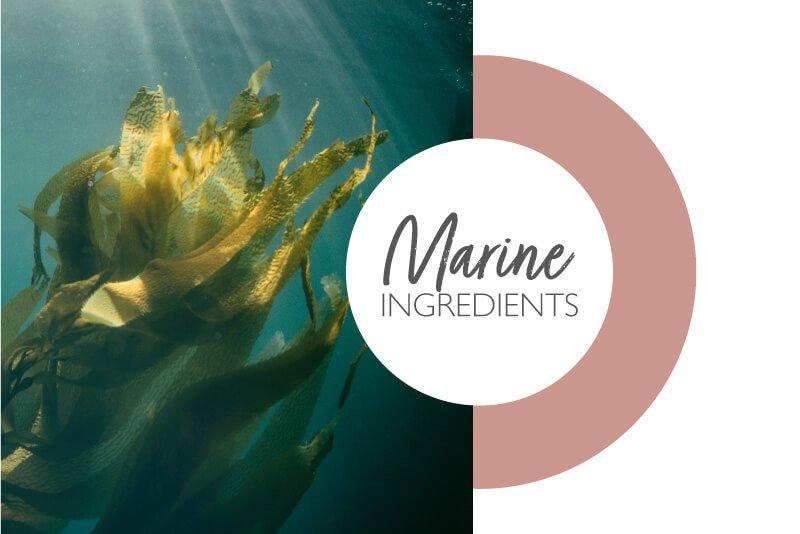 Lessonia ingredients - Marine ingrédients